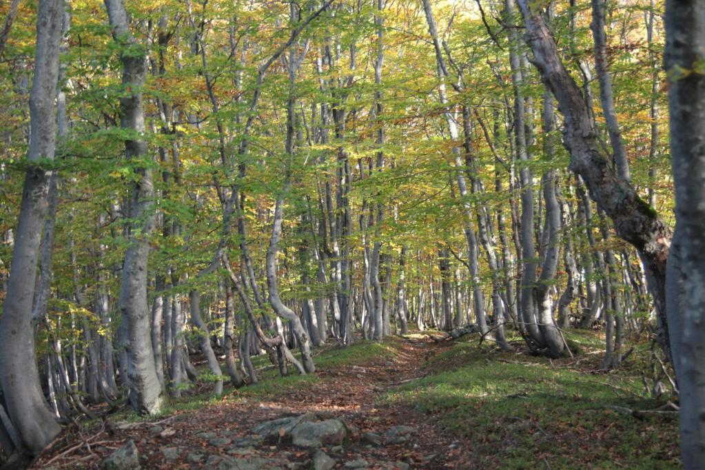 Im Wald in Richtung Alpe Bassa